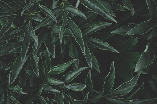 pexels free stock photos leaves close up